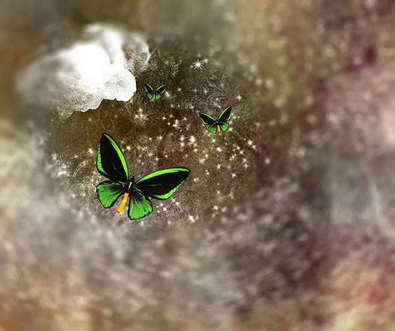 papillon vert.jpg