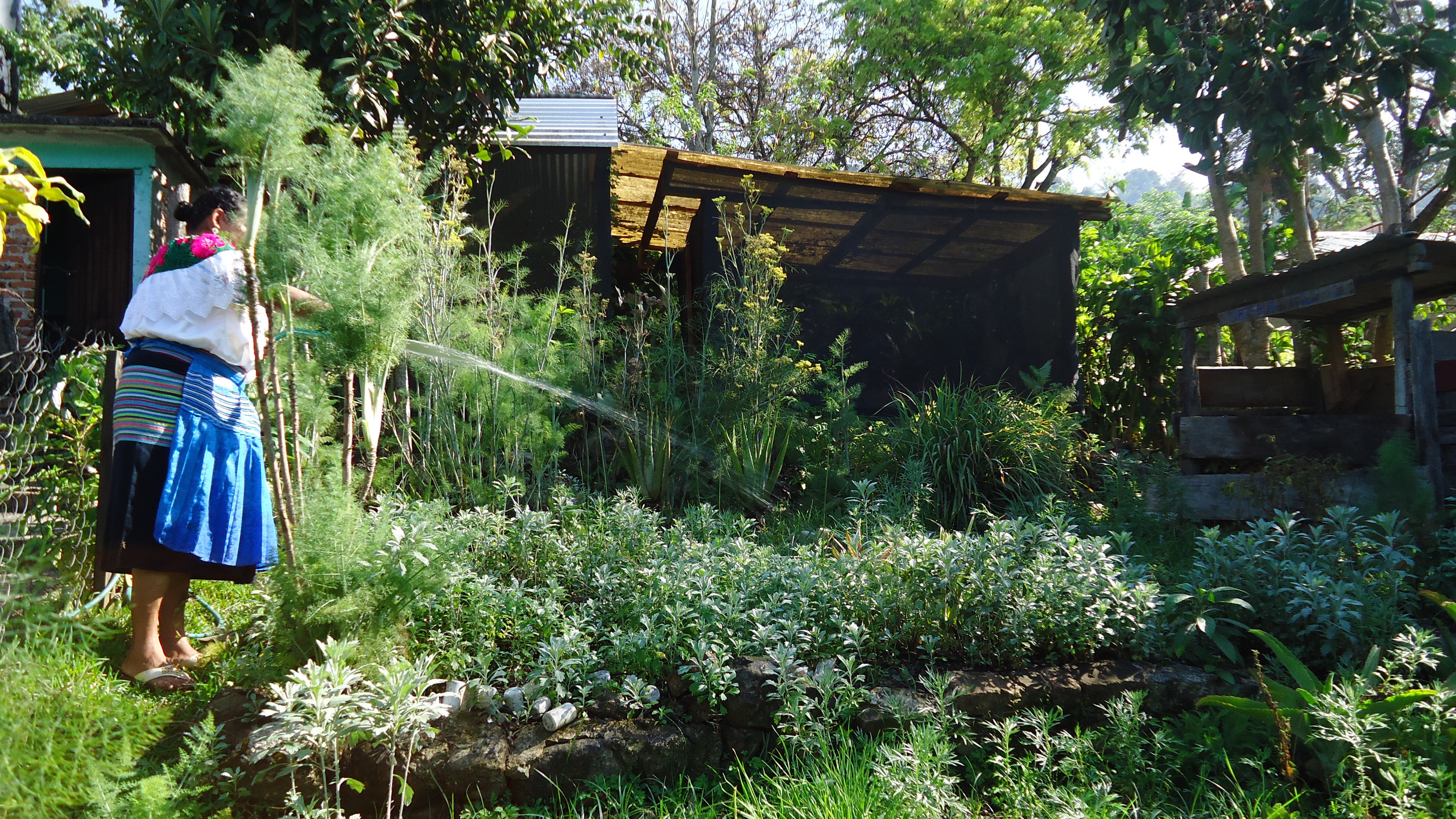 Arreglo del jardín