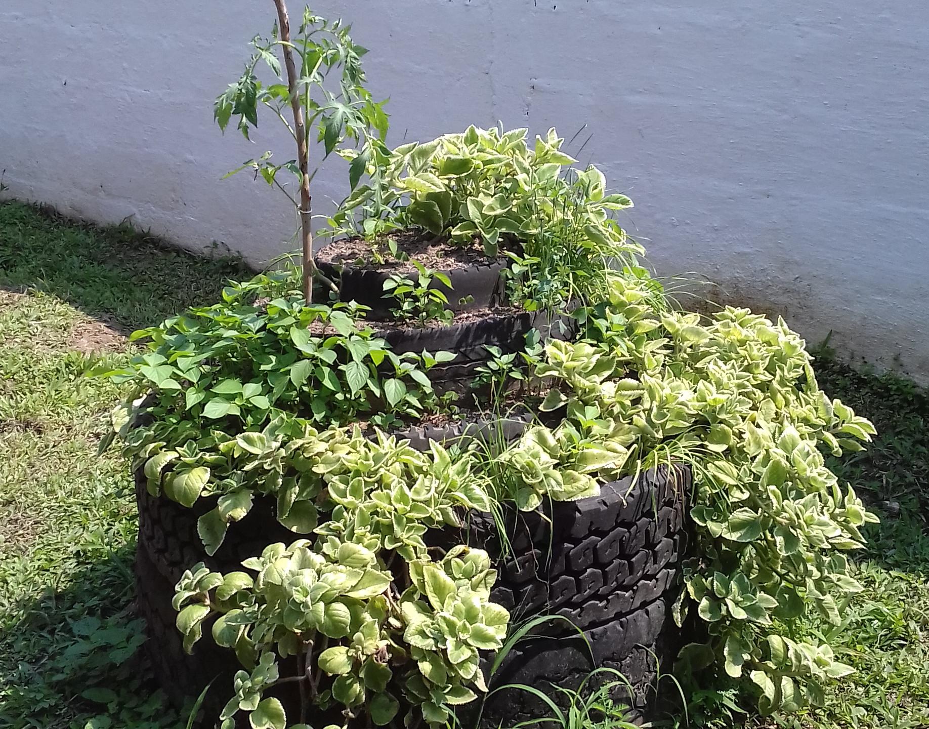 aprovechando espacios para sembrar