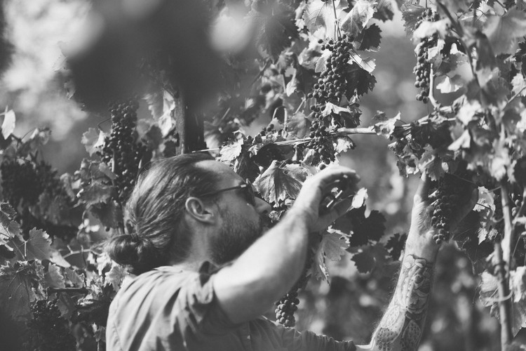 Timothé_Renaud_Wine_Explorers-03.JPG