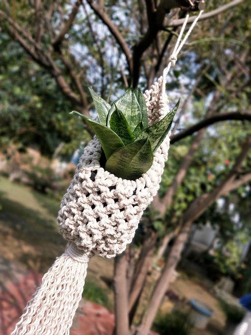 Macrame Plant Holder (Nest Shaped)