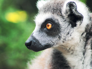 Meat-eaters may speed worldwide species extinction, study warns.