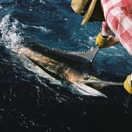 CapeVerd_fishing_5.jpeg