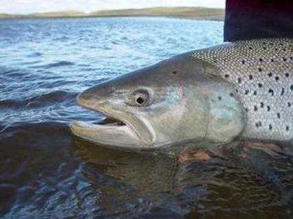 Arg-sea-trout-3.jpeg
