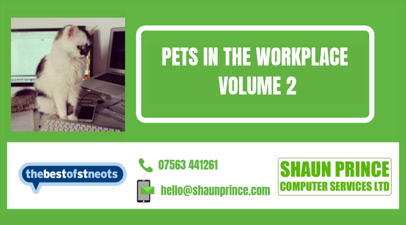 Pets in the Workplace - Volume 2