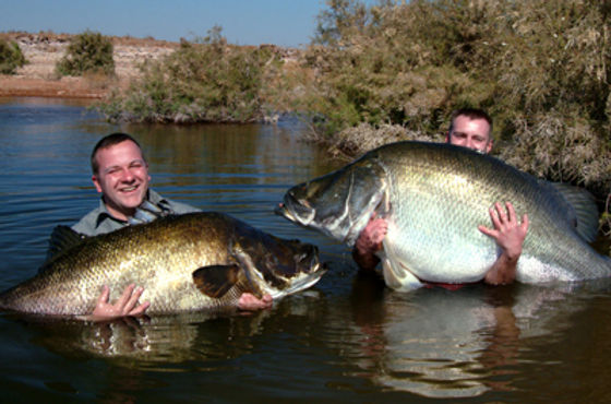 Two-Big-Nile-Perch.jpeg