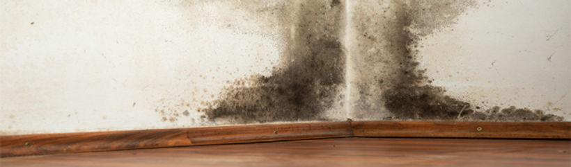 Mould Decontamination - SOS Leak Detection