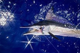 spearfish_1734856i.jpeg