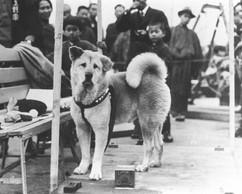 การเสียชีวิตของฮาจิโกะ ณ สถานีชิบุยะ