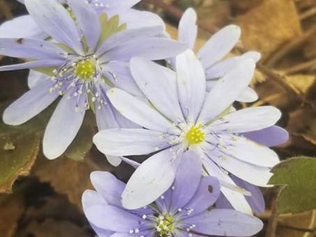 Flowers Blooming!