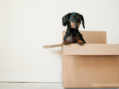 International Relocation with Pets