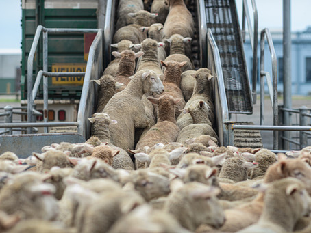 $7.75 MILLION For a Sheep Experiment Station?!