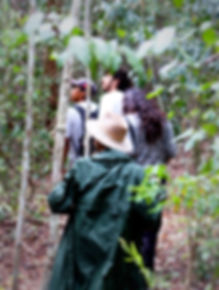 Hiking in Calakmul tours nd trips