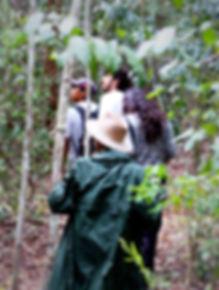 Senderismo en Calakmul