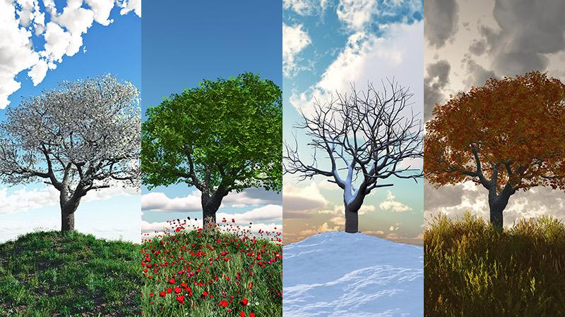Khí hậu 4 mùa ở Canada