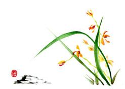 s_ran-orchidee.jpg