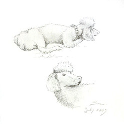 Sam, le chien de Liz & Malcom