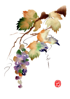 Budo  -raisin