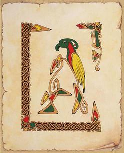 A. celtique