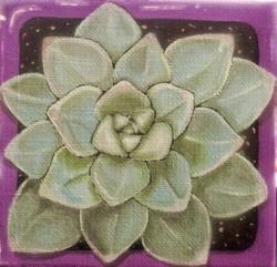 Succulent #3