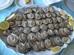 Croatian Specialty : Ston Oysters