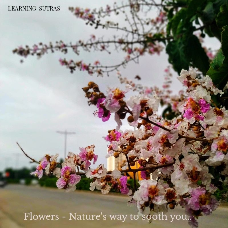 Flowers - Learning Sutras