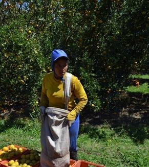 v6a8| Trabalhadores rurais em tempos de pandemia
