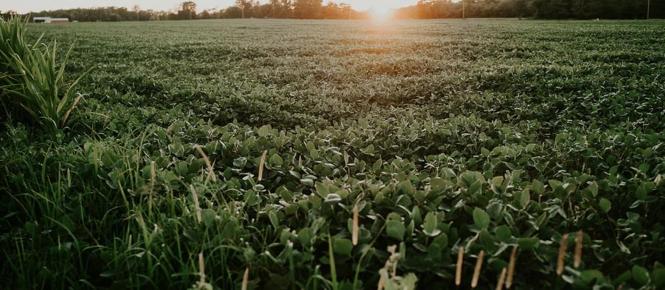 v4a19| Se esperarmos o agronegócio, morreremos de fome: população quer alimentos e não commodities!
