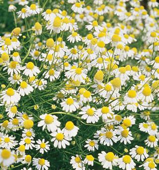 5 Healing Herbs with Tea!