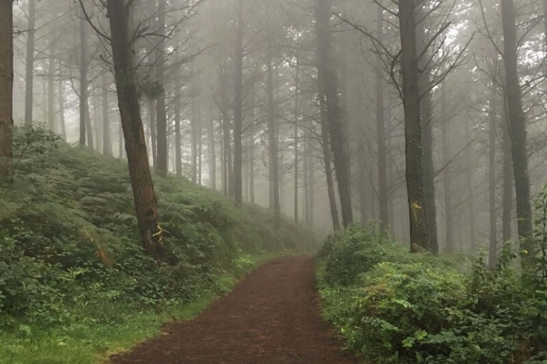 misty path through pine trees on the Camino norte with yellow arrows