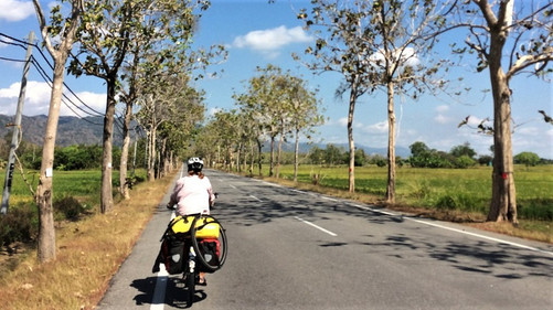 Shot from behind as Becky cycles along a tree-lined road on a sunny day.