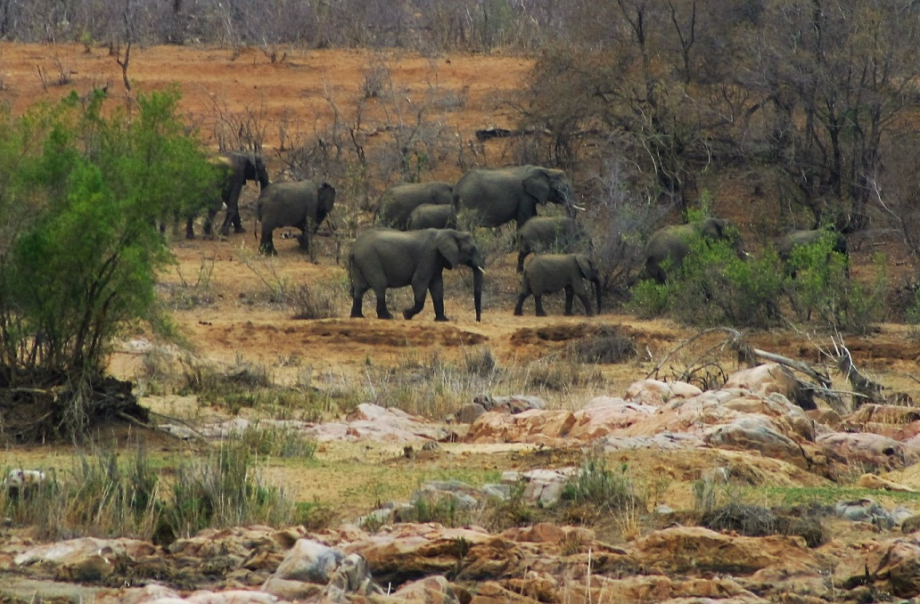 An elephant herd in the distance