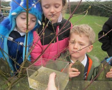 Class One learning about frog spawn