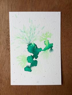Carte 14