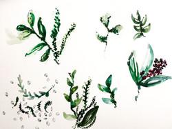 Herbier 2
