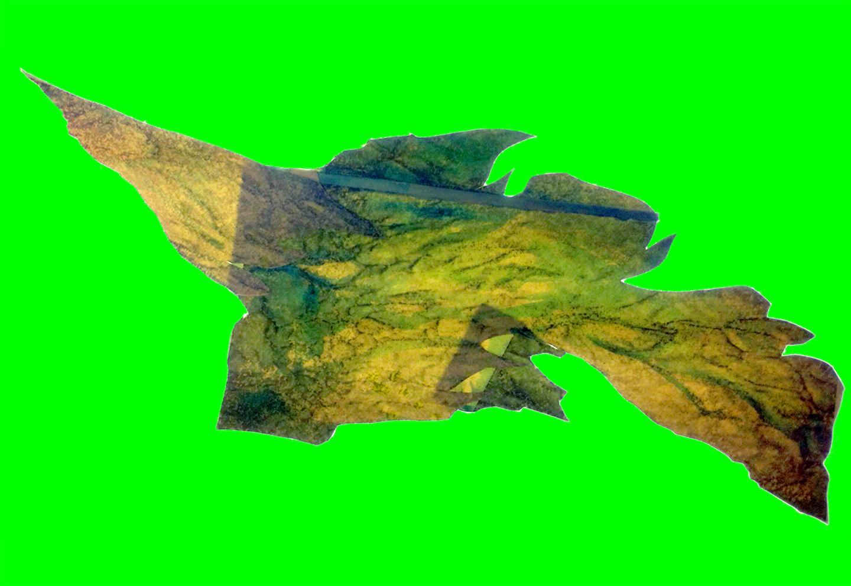 [wanting] green sea