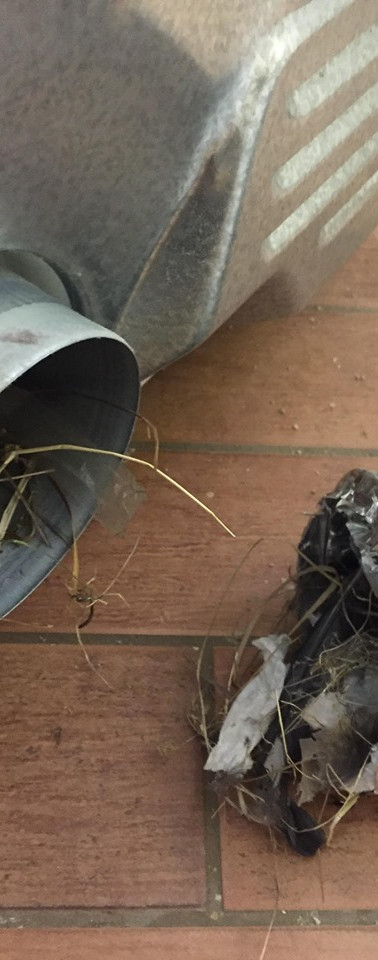 how to remove a bird nest from your dryer duct