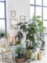 plants web 2.jpg