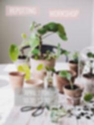 repotting workshop spring 2019.jpg