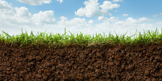 Premium Lawn Soil