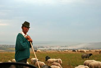 Shepherd and his flock