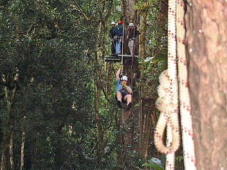 Gavin on the zip line from tree to tree