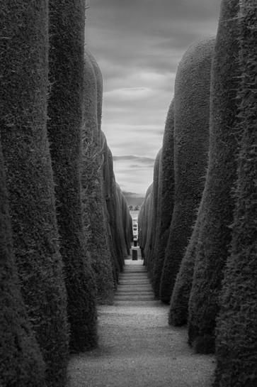 Through the Cypress