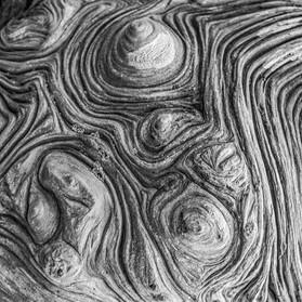 Bumps on a Log