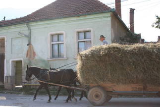 Farmer returning from the harvest