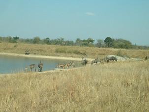 Waterhole with Waterbuck, Impala, Zebra & Wildebeest