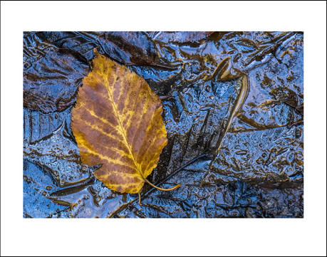 Last of Autumn on the Forest Floor $15