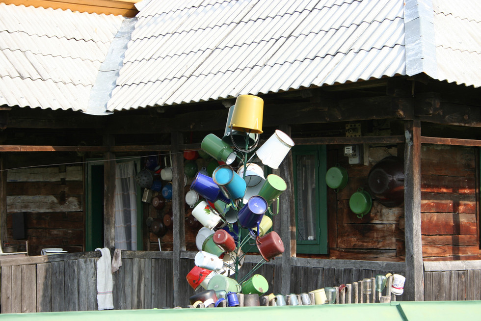"""We saw a lot of these """"bucket"""" trees"""