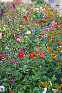 Gardens at Dragomirna Monastery, Bucovina