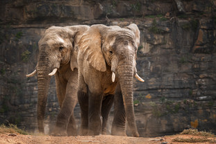 """Elephant Approach"""